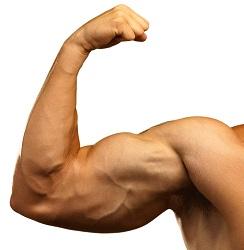Bodybuilders Suplementos