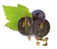 Semente de uva